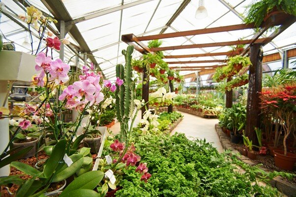 Help your customer to find the ideal plant
